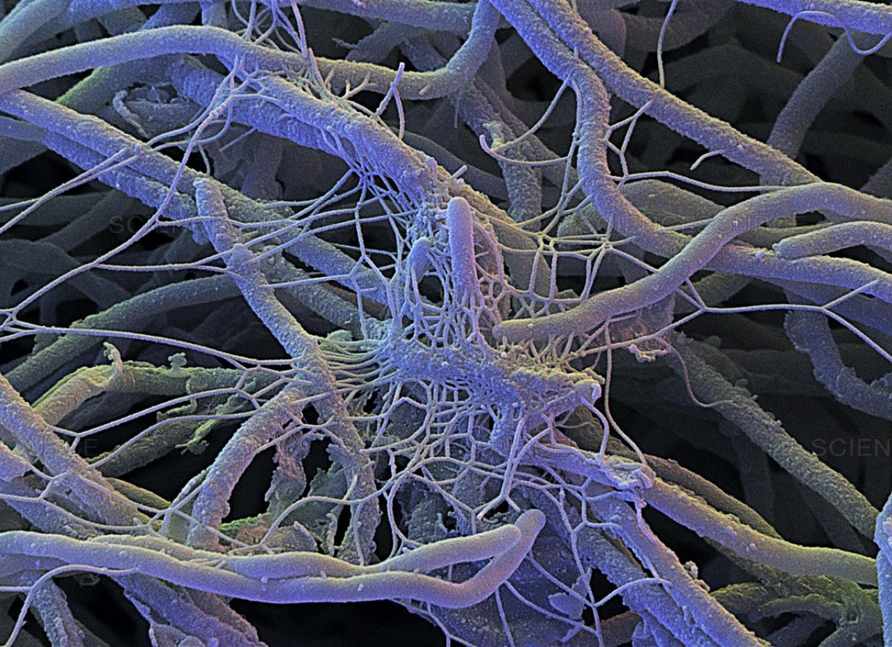 Съедобные грибы якутии фото и название долорес написала